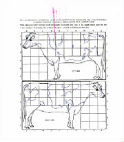 elmartin_farm_holstein_registration_raw_scan_backsidex950x1080.jpg